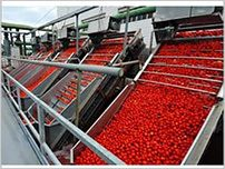 Tomato Powder/Fruit Powder Plant