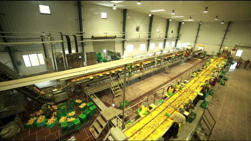 Tomato/ Mango Processing Plant